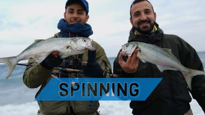 pesci serra catturati a spinning