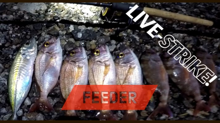 feeder in mare ai pagri