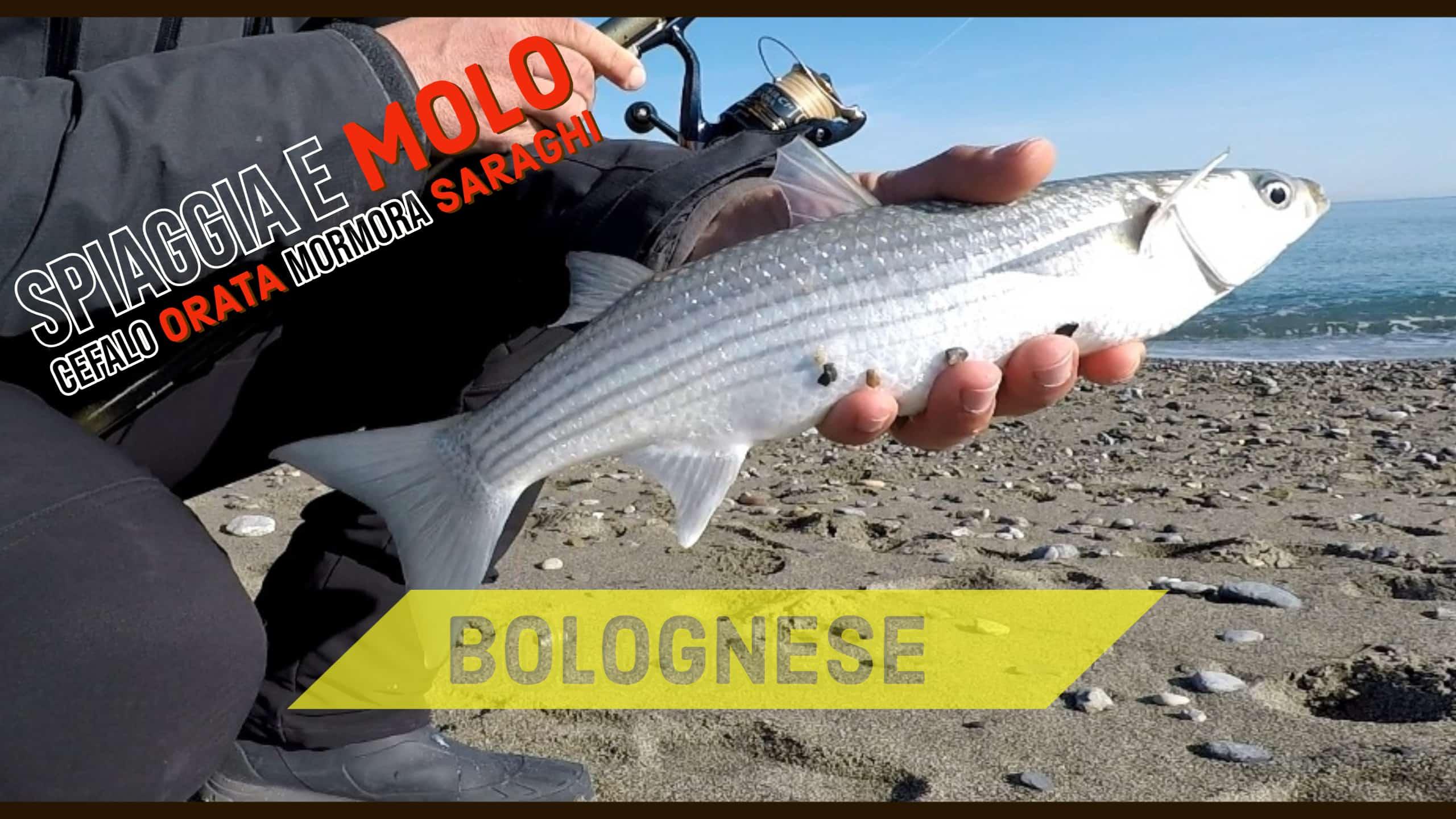 pesca con la bolognese dalla spiaggia e dal molo